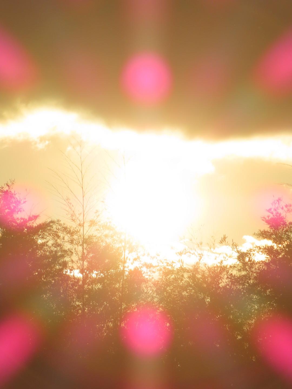 【写真】気まぐれに風景・生き物撮影